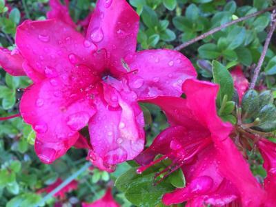 Red Rain 5-19-19