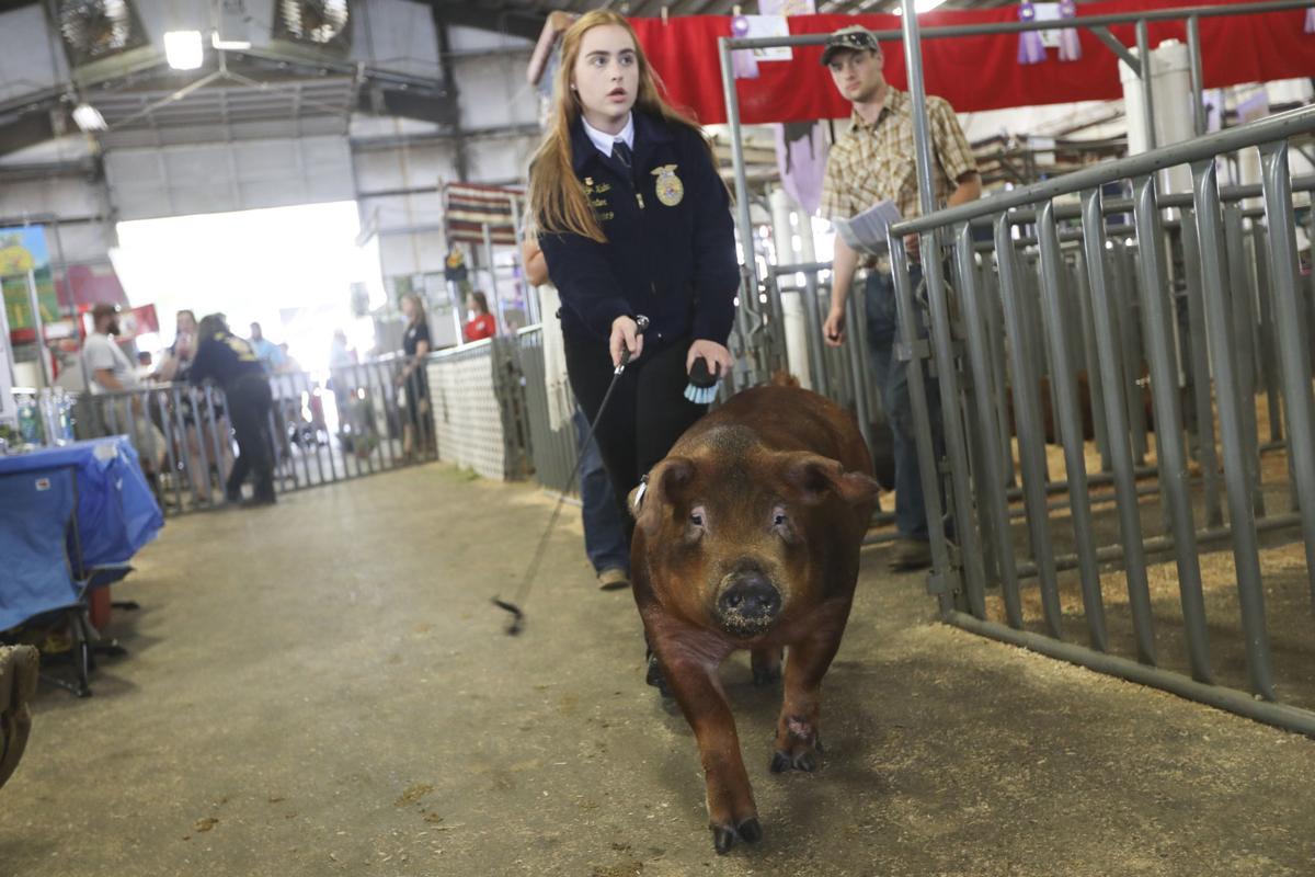 Linn County Fair Livestock Auction
