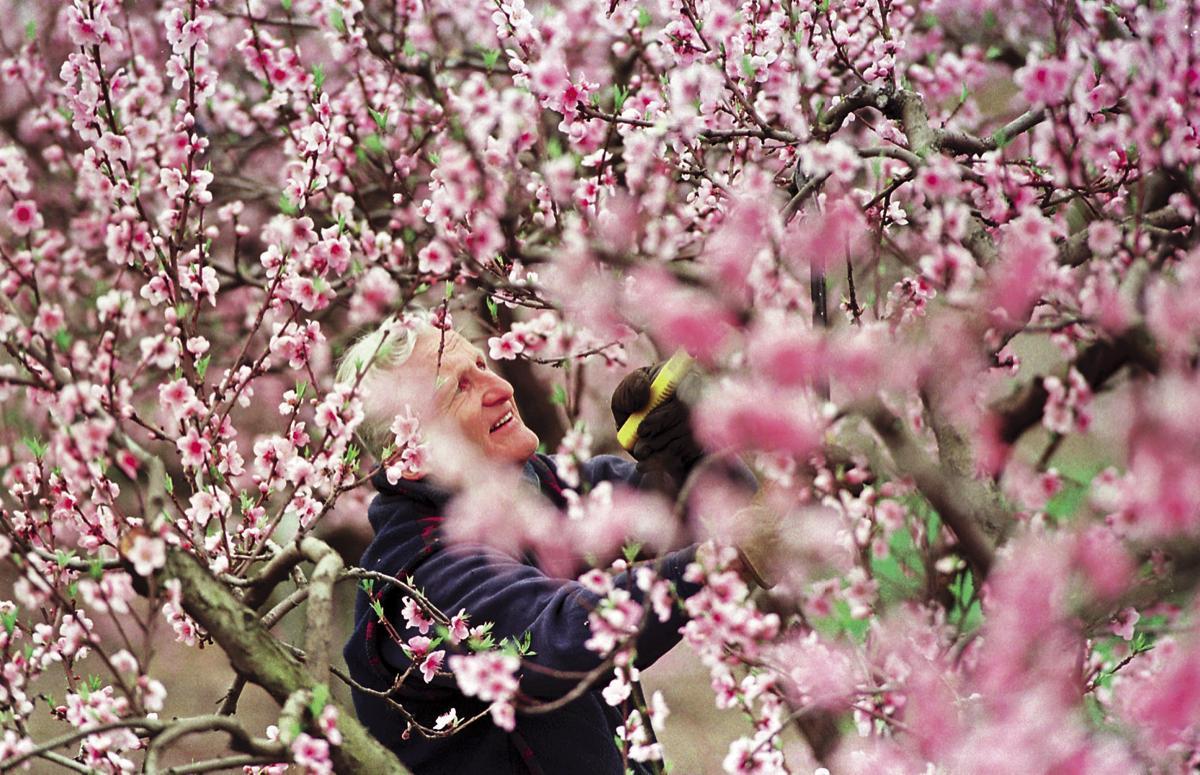 Flashback April 2000 Harry Lagerstedt