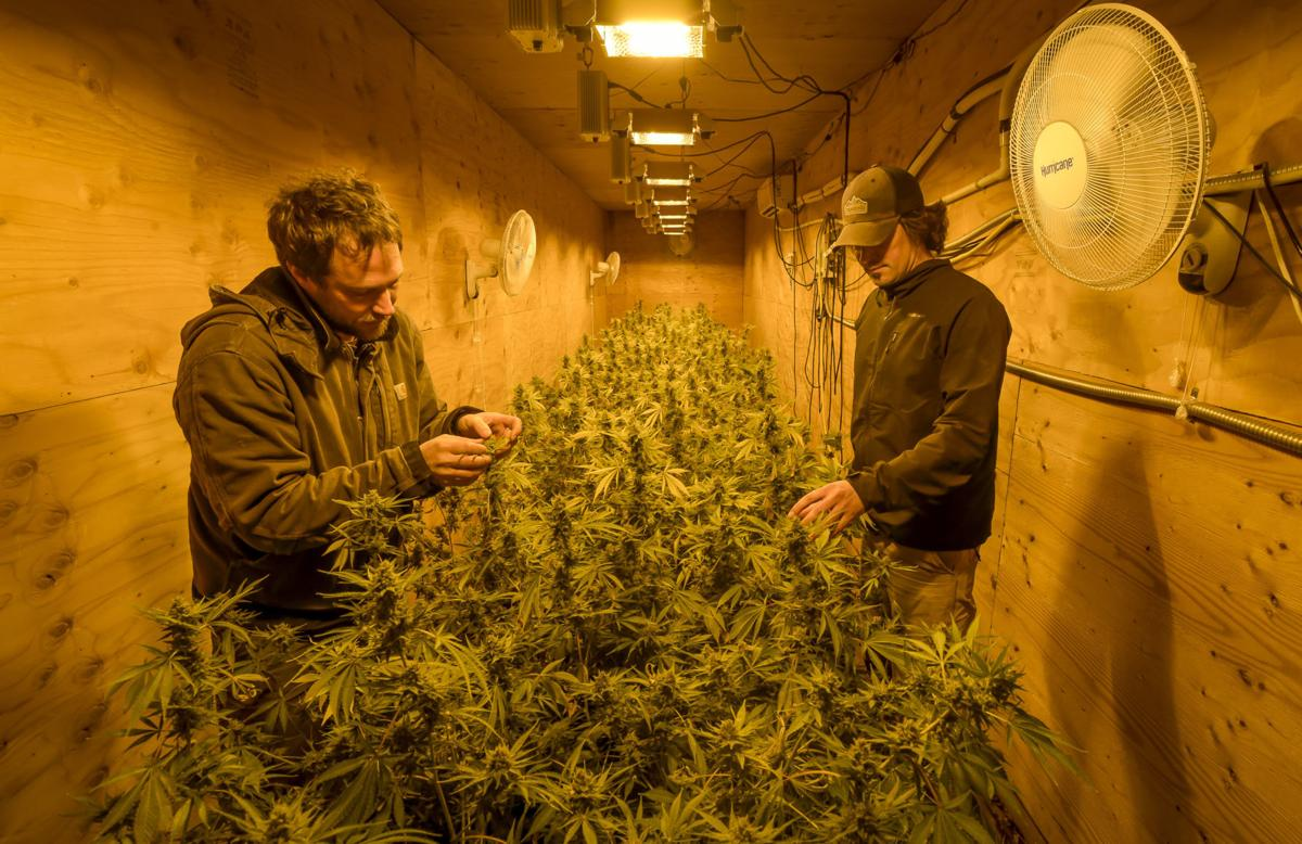Pioneers of hemp: Brothers prove major players in new