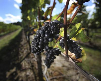 benton-lane winery