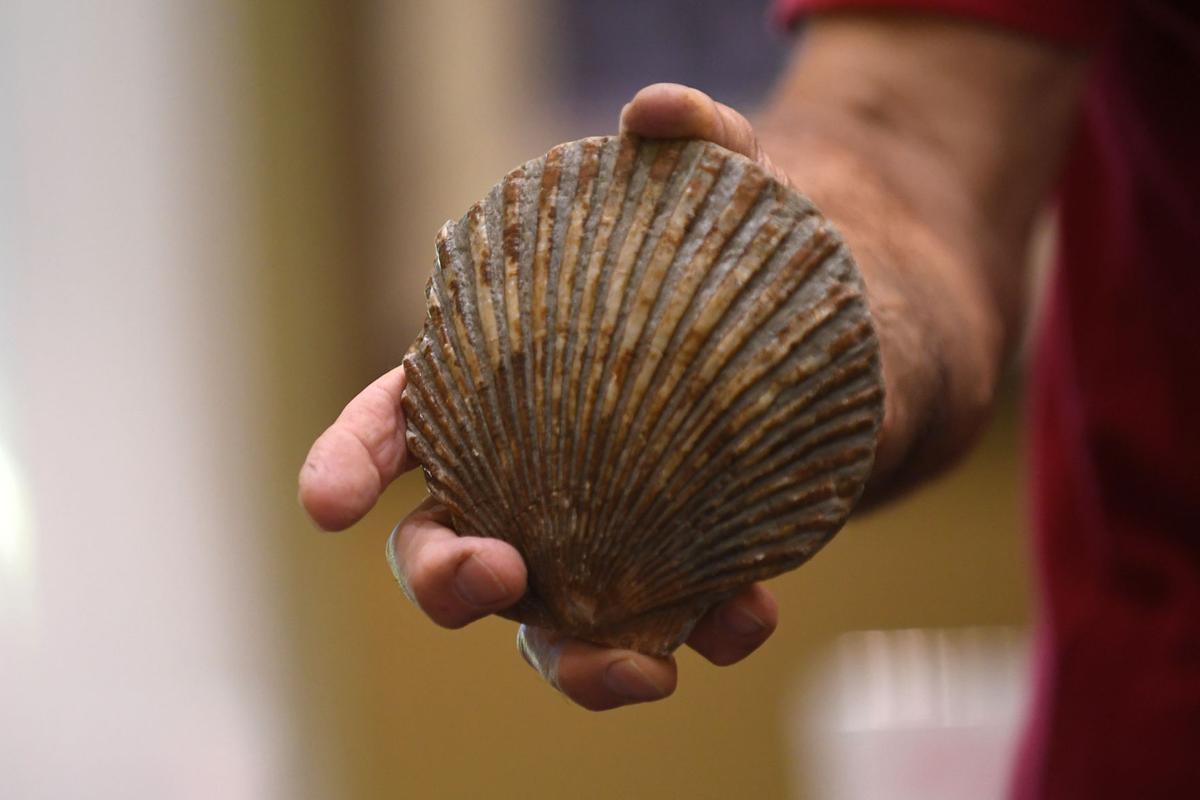 092817-adh-nws-fossils-0003.jpg