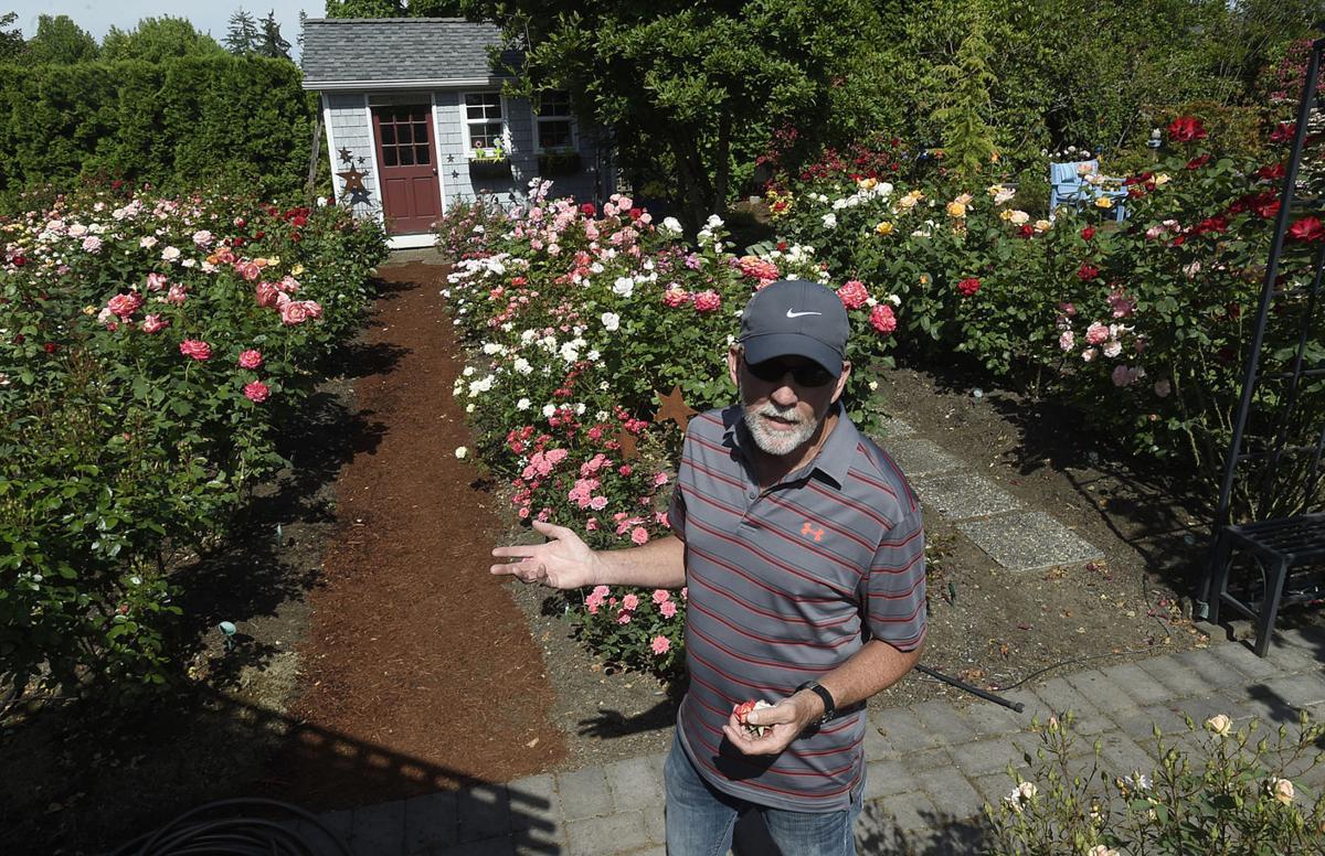 A promise of a rose garden | Local | democratherald.com