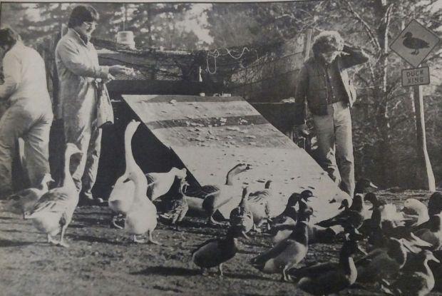 Ducks 1979