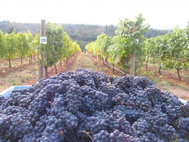 TeBri Vineyards
