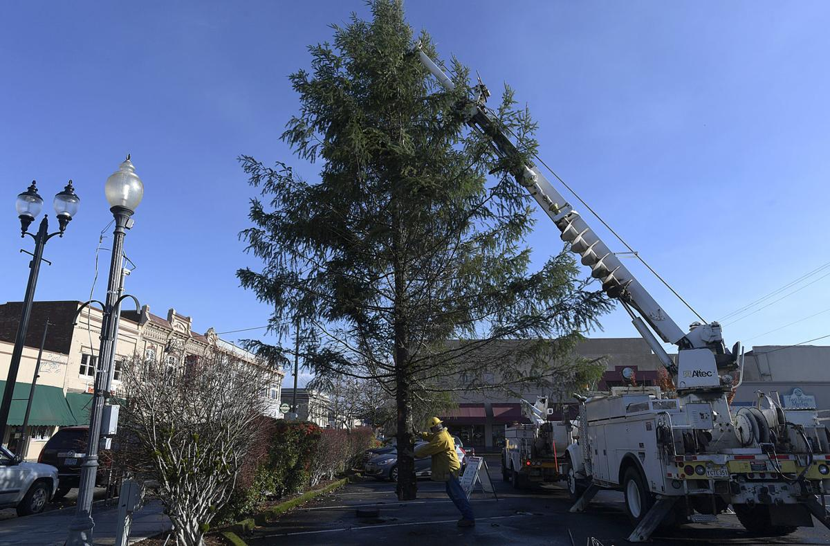 Downtown Albany Gets Its Tree