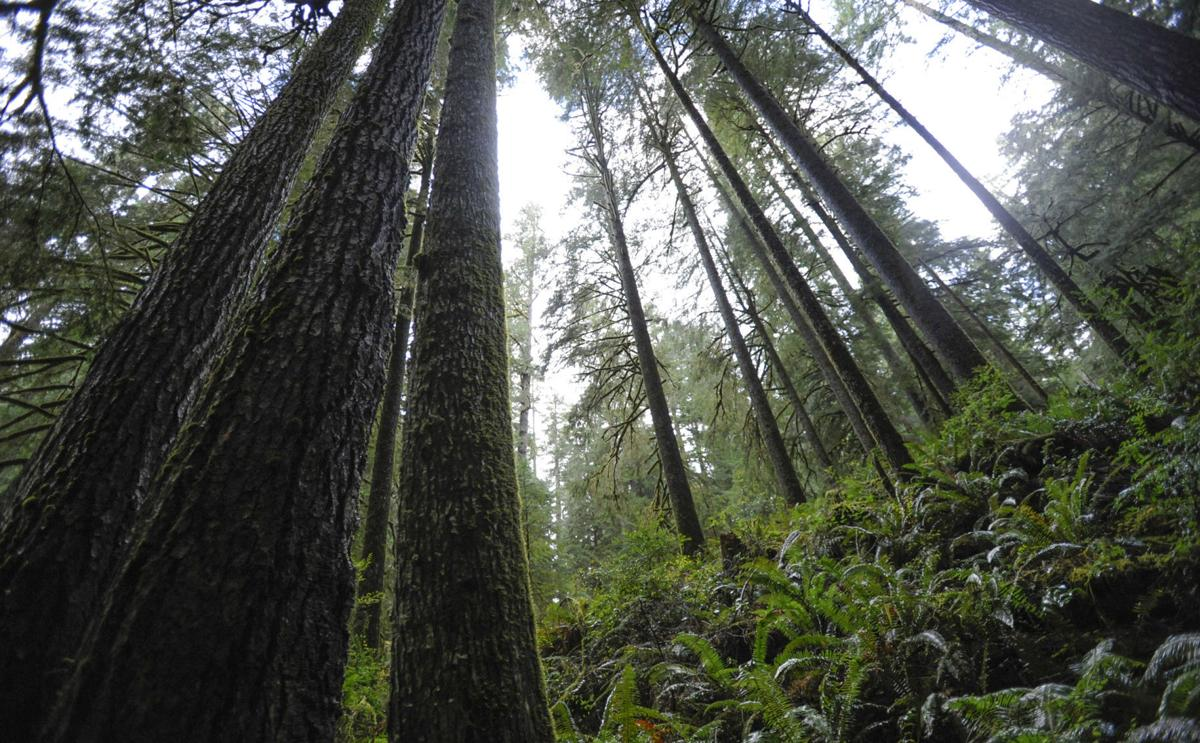 elliott state forest stock 07