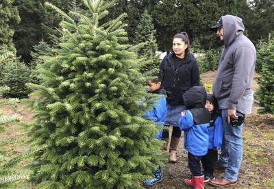 Christmas Tree Debate (copy)