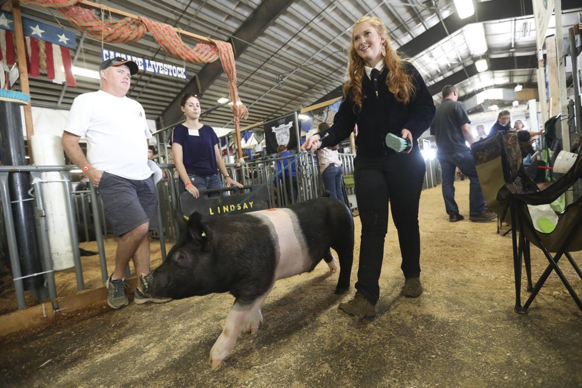 Linn County Fair Livestock Auction 2019