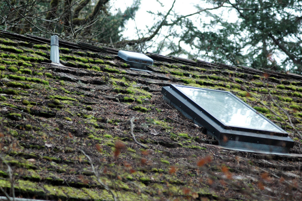 Gardening Maintaining A Moss Free Roof Takes Some Effort Columnists Democratherald Com