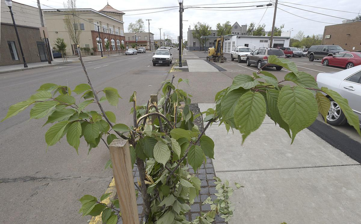 050118-adh-nws-Trees Destroyed01A-my