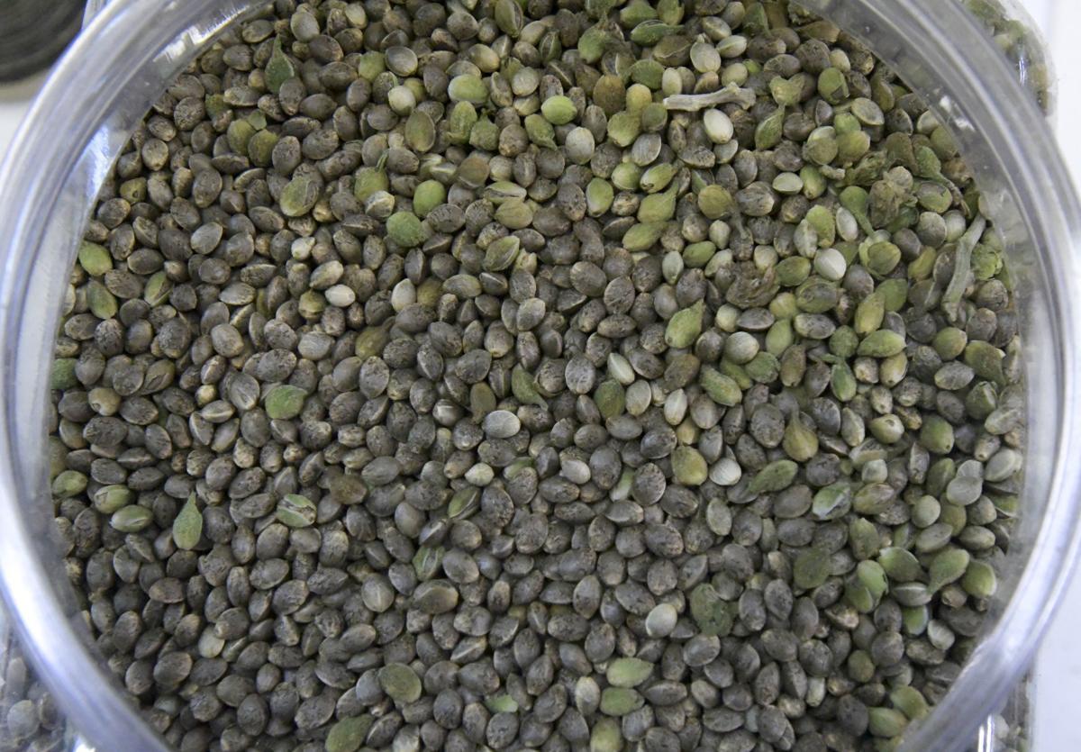 oregon-cbd-seeds-02