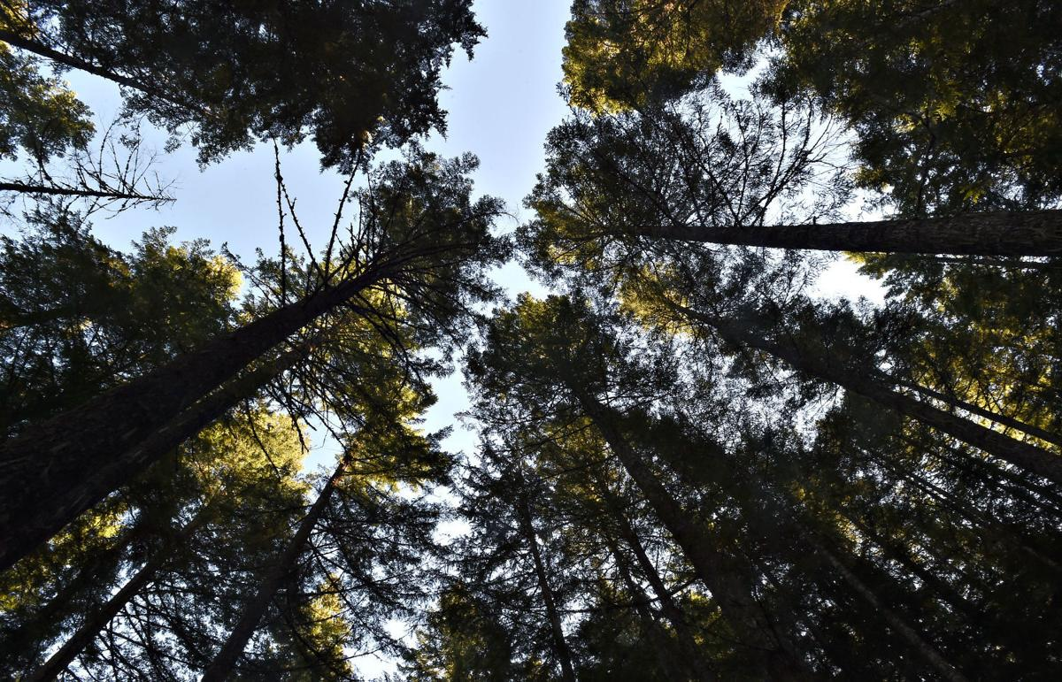 Santiam State Forest