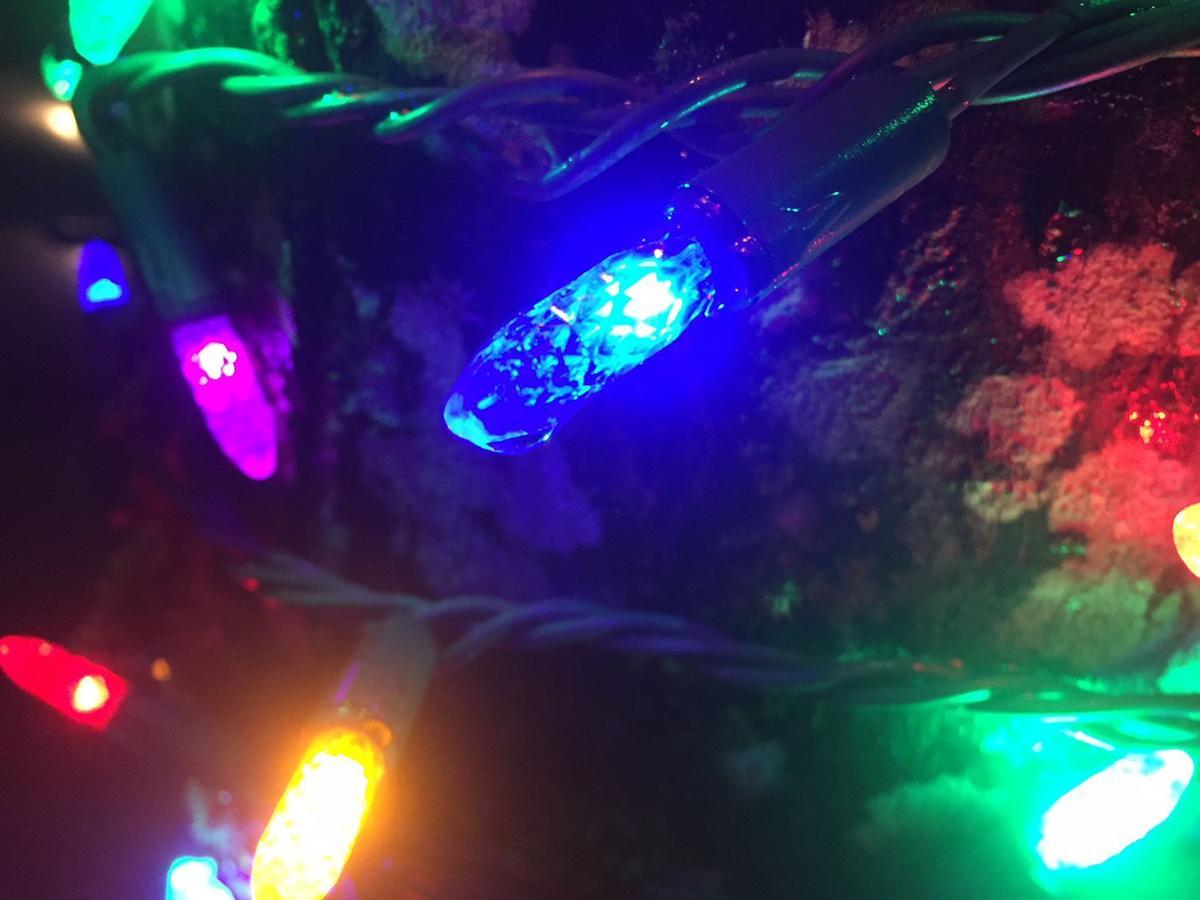 Blue Light Special 12-4-17