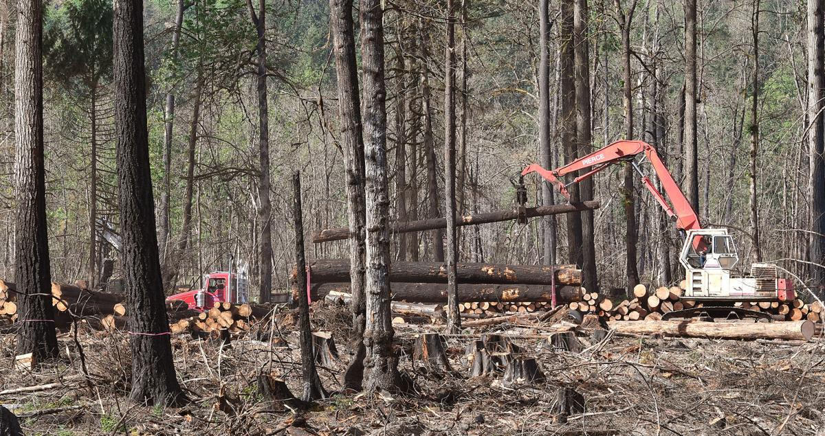 051921-adh-nws-Timber Salvage Lawsuit01-my