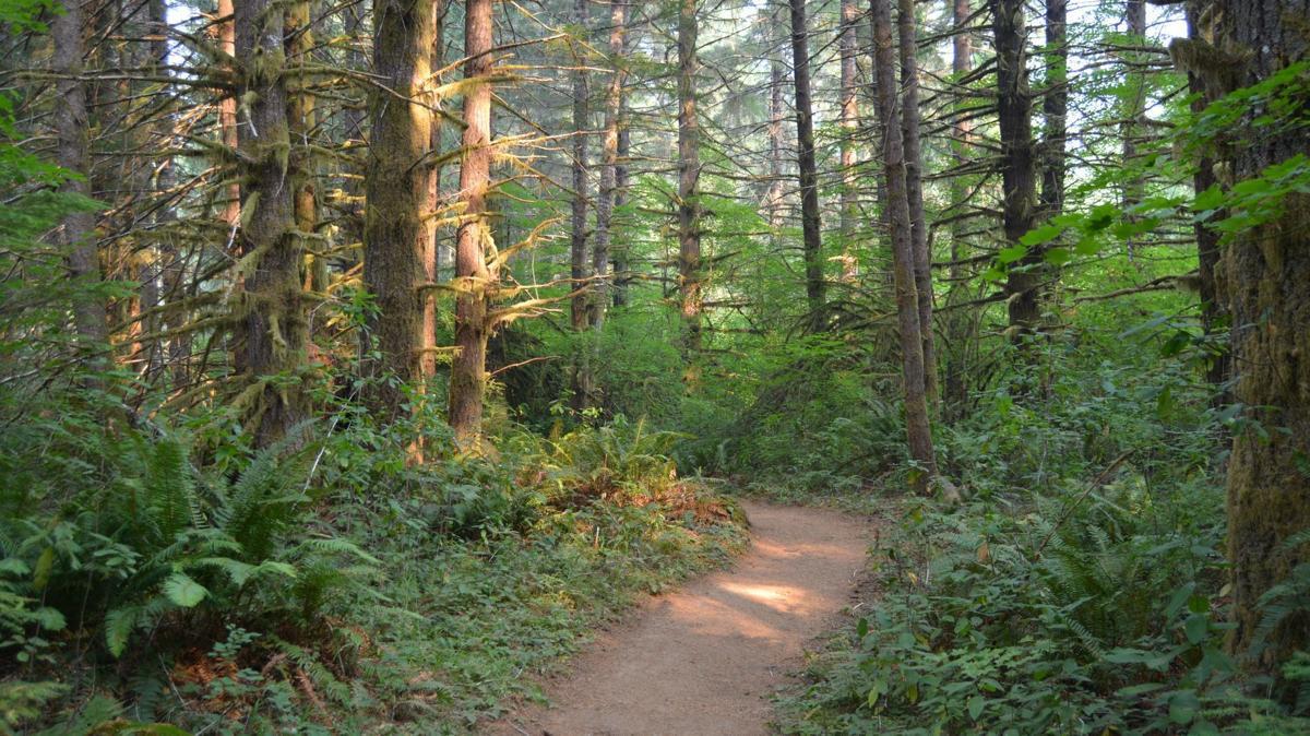 Alsea Falls Trail: Forest