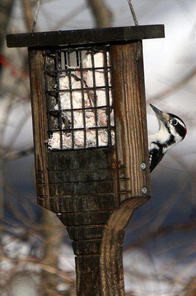 Audubon center offers winter activities