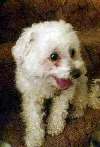 PET OF THE WEEK: Lulu's looking for love