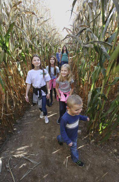A-maze-ing fall fun