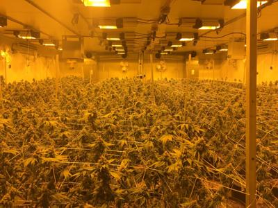 Rosamond grow facility