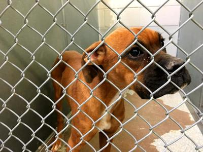 DeSoto County Animal Shelter