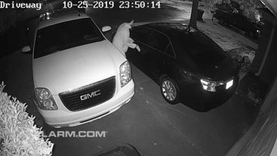 Auto burglary screenshot