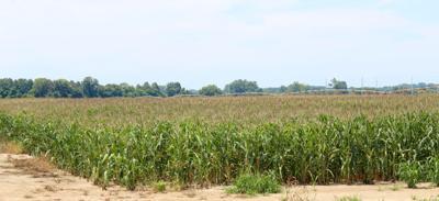 Farmland in DeSoto County