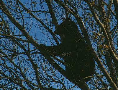 Black bear spotted near golf course