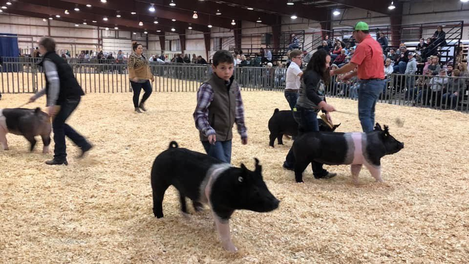 Comanche does well in Great Plains Winter National Pig Show