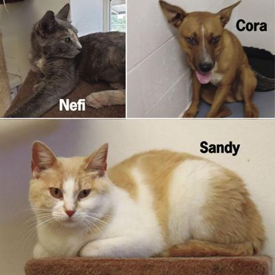 Nefertiti, Sandy and Cora