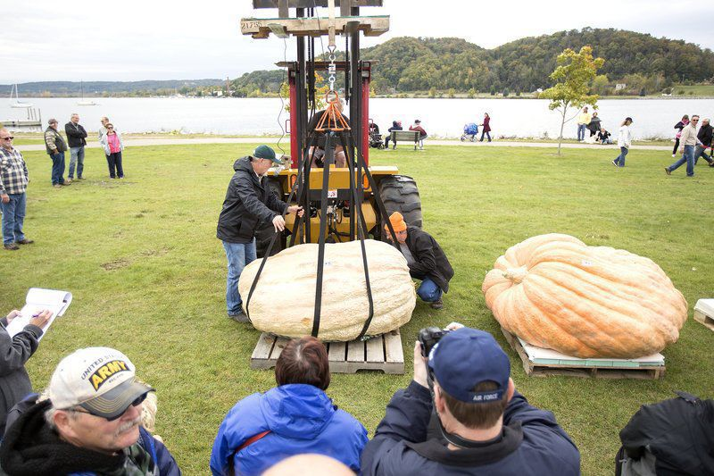 Frankfort man carves 1,300-pound pumpkin each year