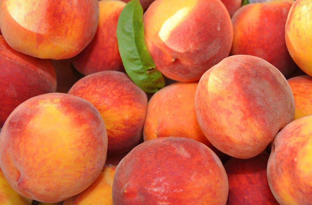 ZIon UCC's Peach Festival