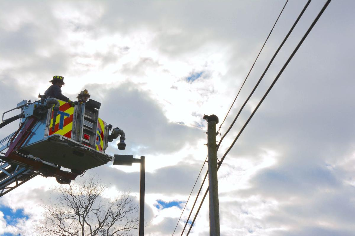 Firefighters rescue cat