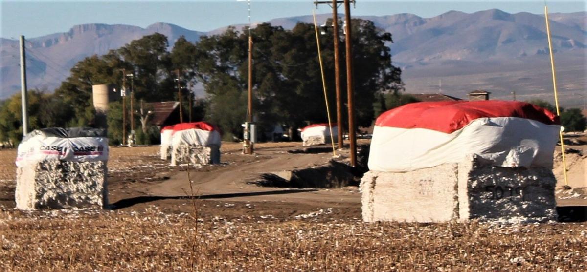 201114-localnews-cotton (1).JPG