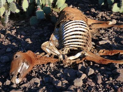 Animal deaths