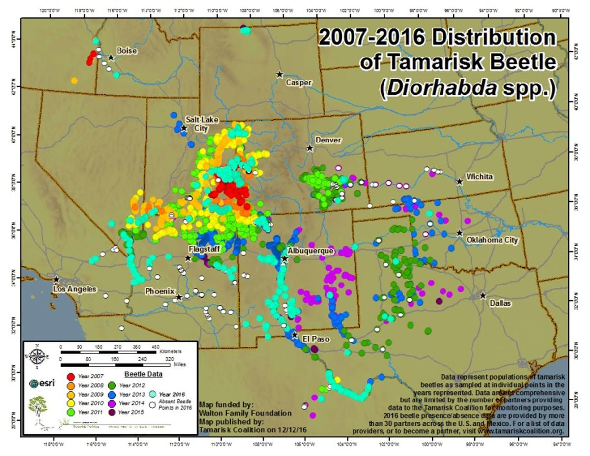 Tamarisk coalition annual monitoring map of the tamarisk leaf beetle