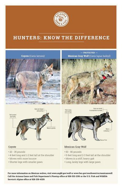 Differences between wolves and coyotes