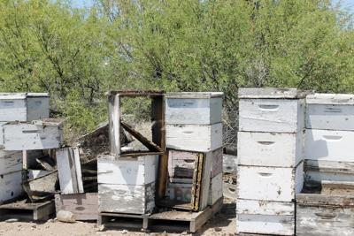 Beehive thefts
