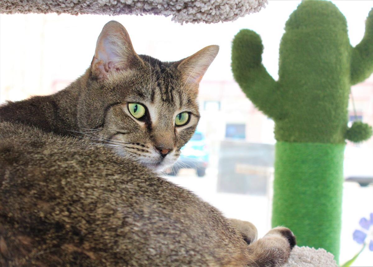 210421-localnews-cat (1).JPG