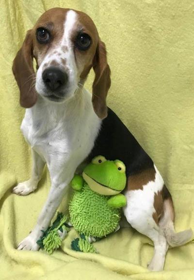 Springfield Humane Society: Pet of the Week