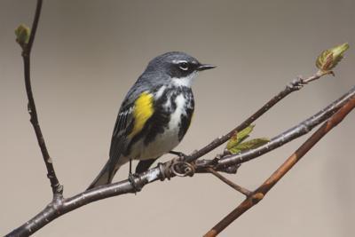 An adaptable bird