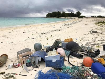 Seabird Sanctuary Plastic Death