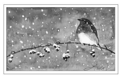 03132021 TOS_WinterBluebird