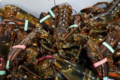 11282020 Belgium EU US Lobsters