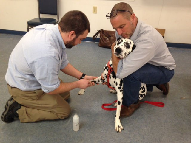 Lead testing for pets 2