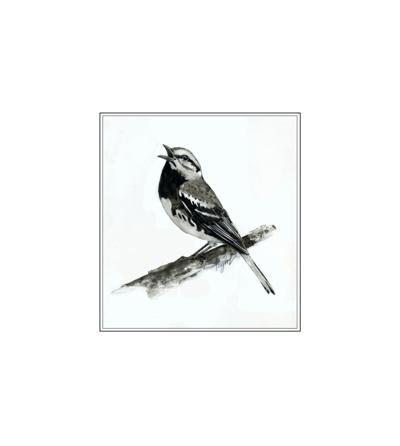 05222021 TOS_Black-throated-green warbler