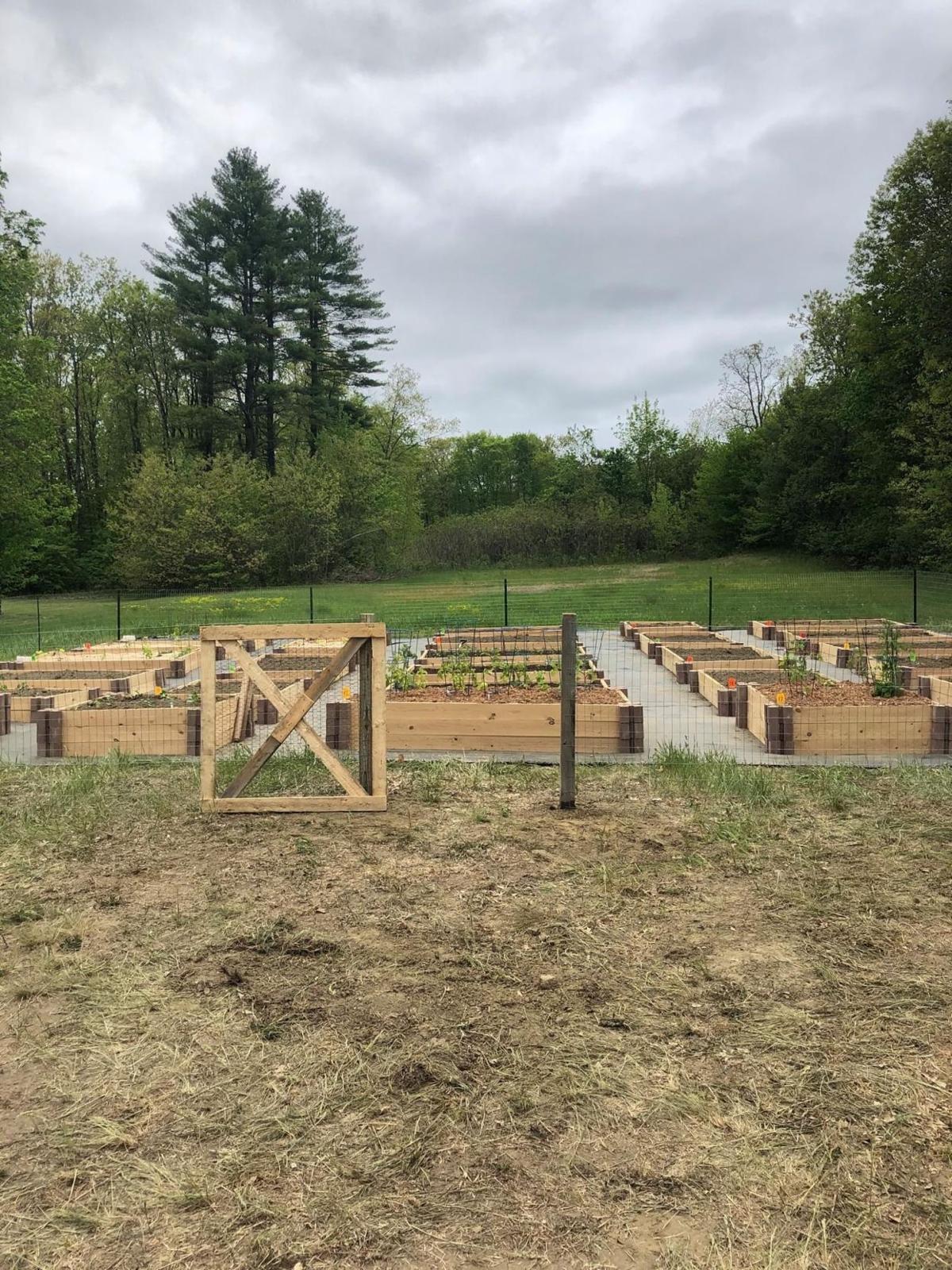0530 Online Charlestown Pandemic Community Garden