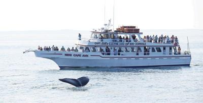 Couple spot whale breaching offshoreline