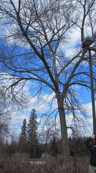 130412_ET_HAND_TREE
