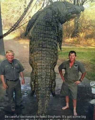 Monster South Georgia Alligator Exposed As Hoax Eagletribune Com
